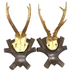 Two Antique Black Forest Deer Antler Trophies, Wood Carved Plaque, German, 1900s