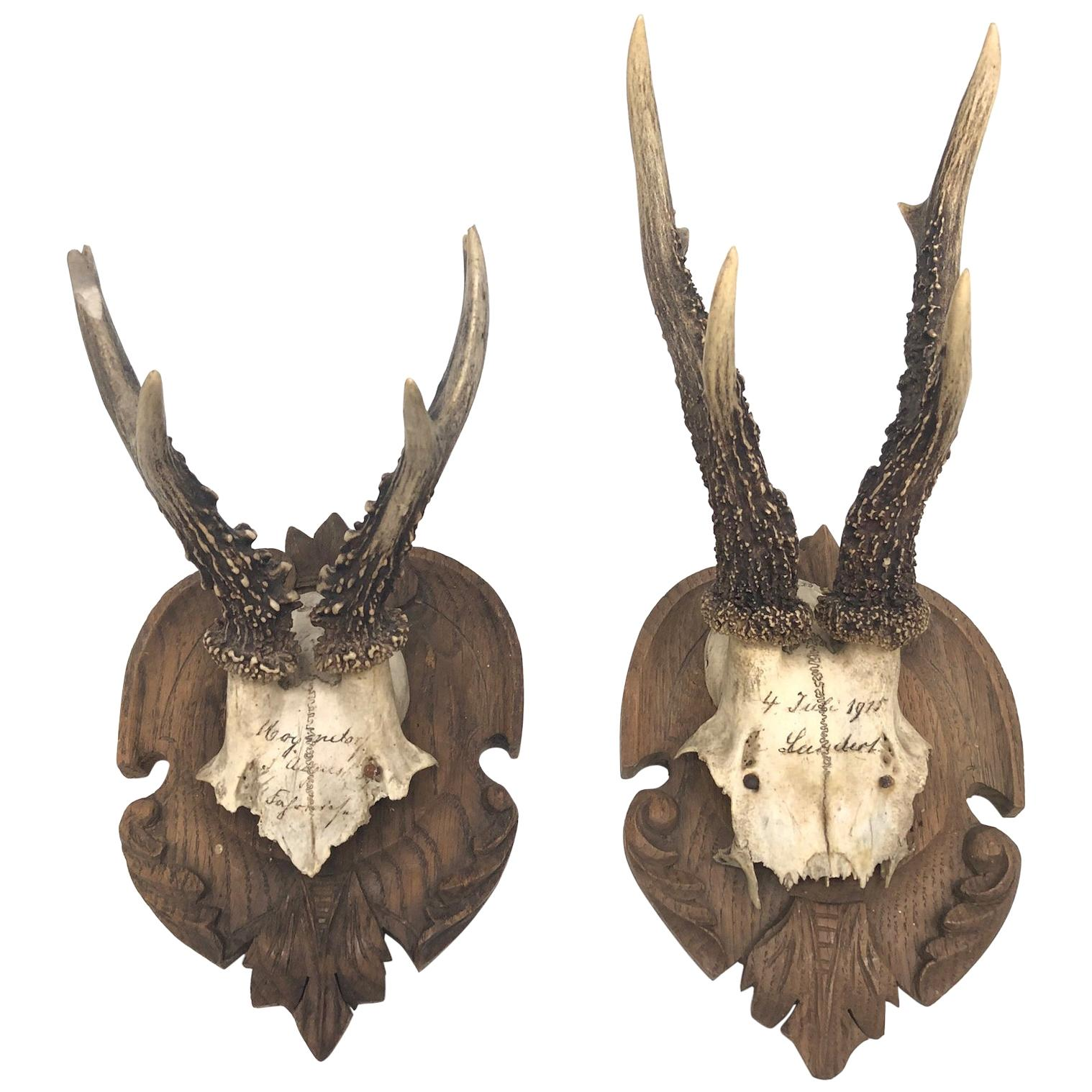 Antique and Vintage Taxidermy - 451 For Sale at 1stdibs