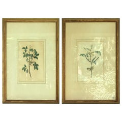 Two Audubon Framed Bird Engravings, circa 1827, Tennessee & Children's Warbler