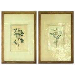 Two circa 1827 Audubon Framed Bird Engravings of Tennessee & Children's Warbler