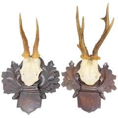 Two Deer Antler Mount Trophy on Black Forest Carved Wood Plaque from Austria