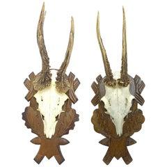 Two Deer Antler Mount Trophy on Black Forest Carved Wood Plaque, German, 1970s