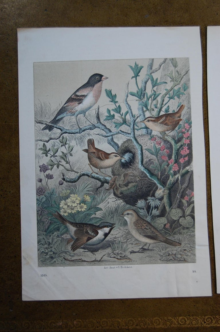 Two similar hand colored prints dated 1865 and 1866, by Anst. v. E. Hochdanz. Good overall condition and bright beautiful colors.