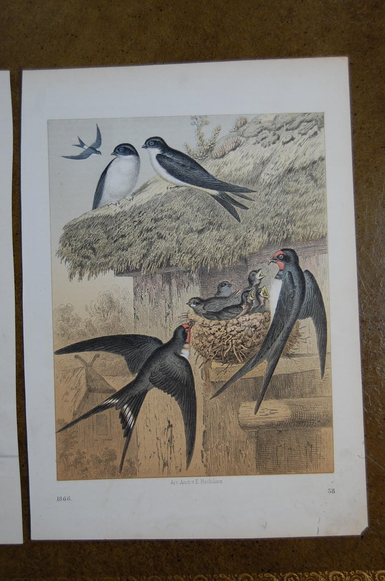 Victorian Two Hand Colored 19th Century Prints Depicting European Bird Species For Sale