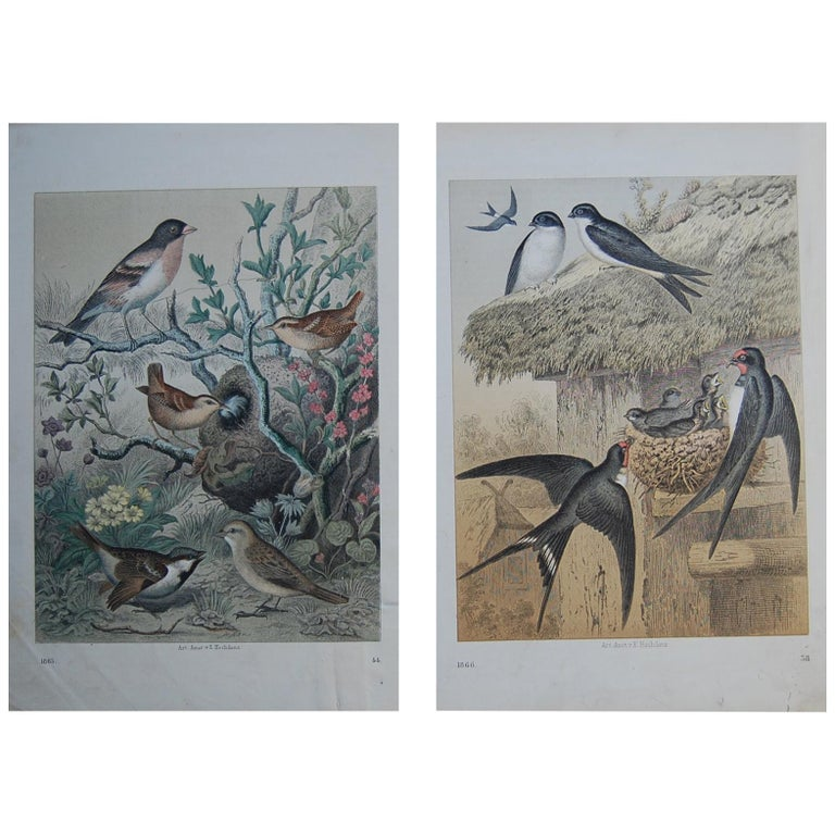 Two Hand Colored 19th Century Prints Depicting European Bird Species For Sale