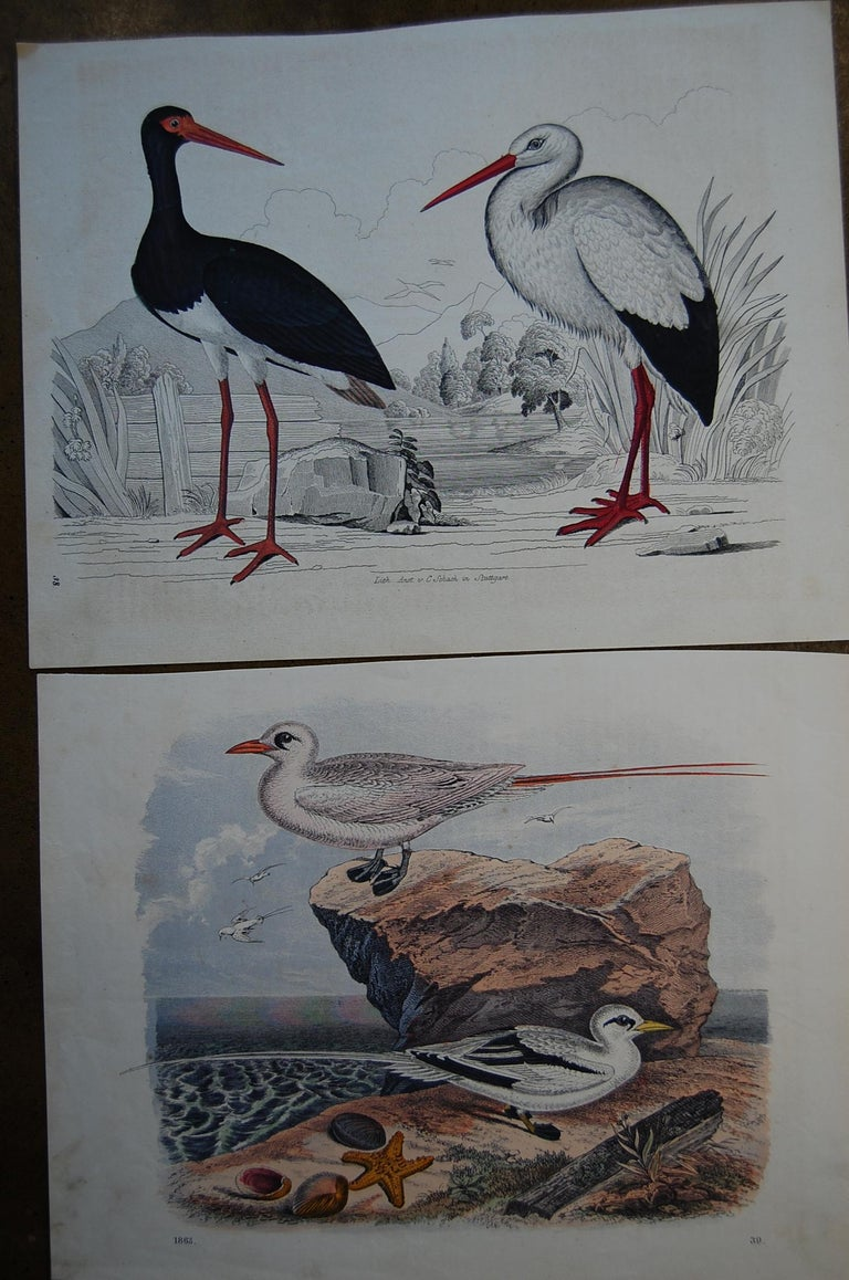 Two similar hand colored prints dated 1863, by Anst. v. C. Schach. Good overall condition and bright beautiful colors.