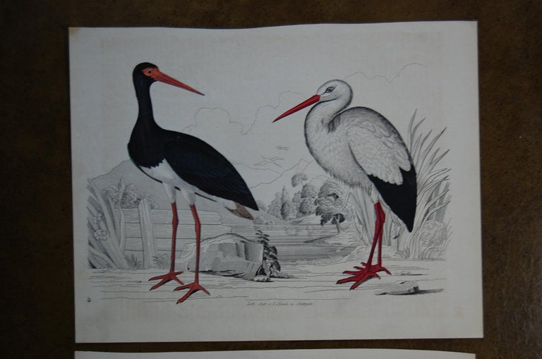 Victorian Two Hand Colored 19th Century Prints Depicting Water Bird Species For Sale