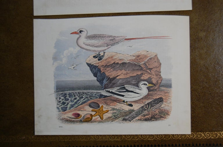 German Two Hand Colored 19th Century Prints Depicting Water Bird Species For Sale