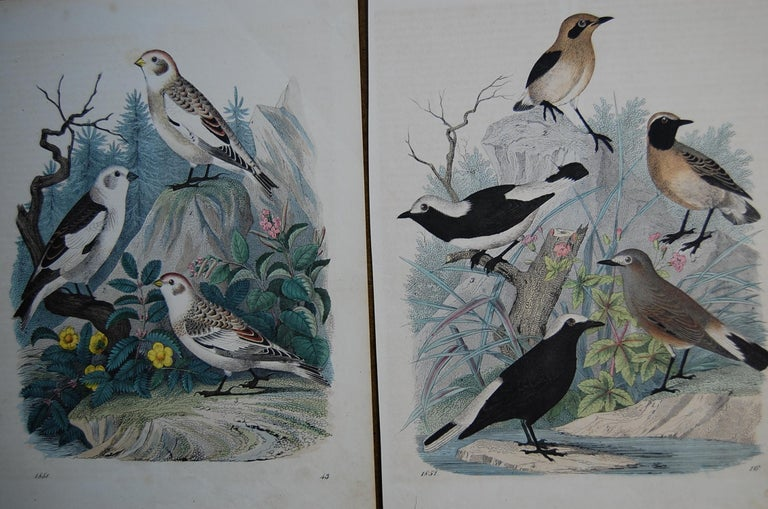 Two similar hand colored prints dated 1851. Good overall condition and bright beautiful colors in very good condition.