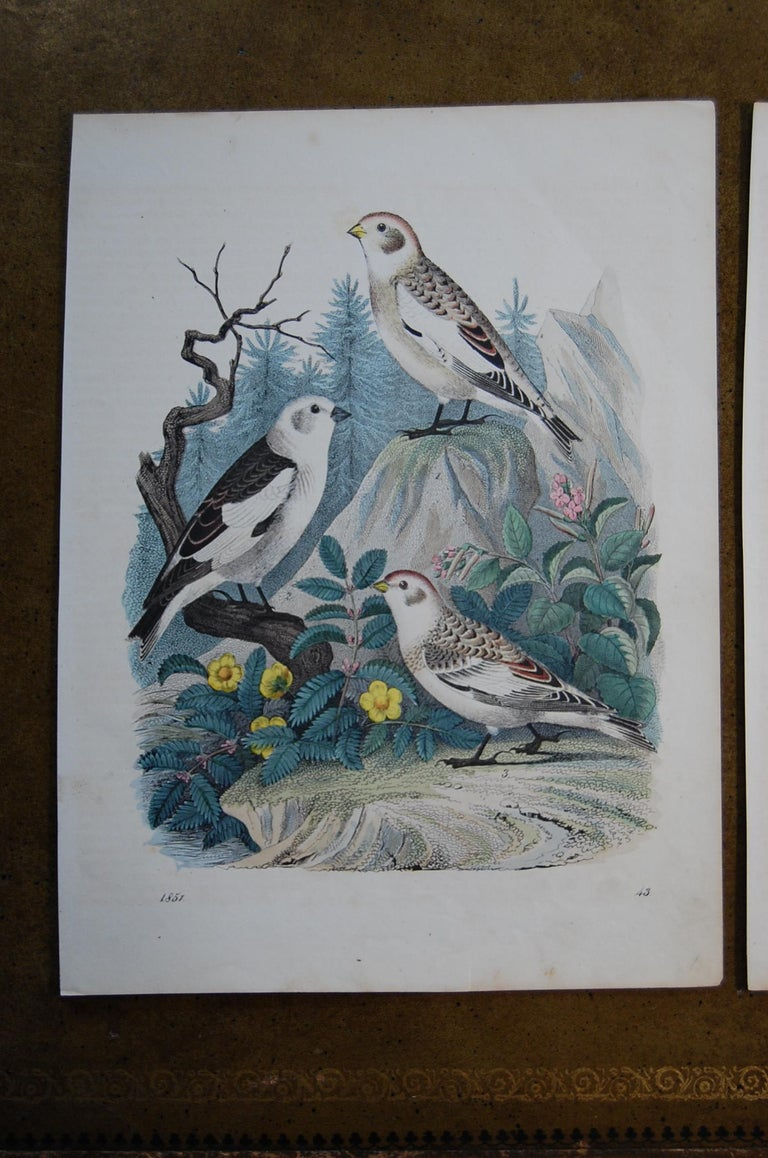 Early Victorian Two Similar Hand Colored Prints Dated 1851 Depicting Bird Species For Sale