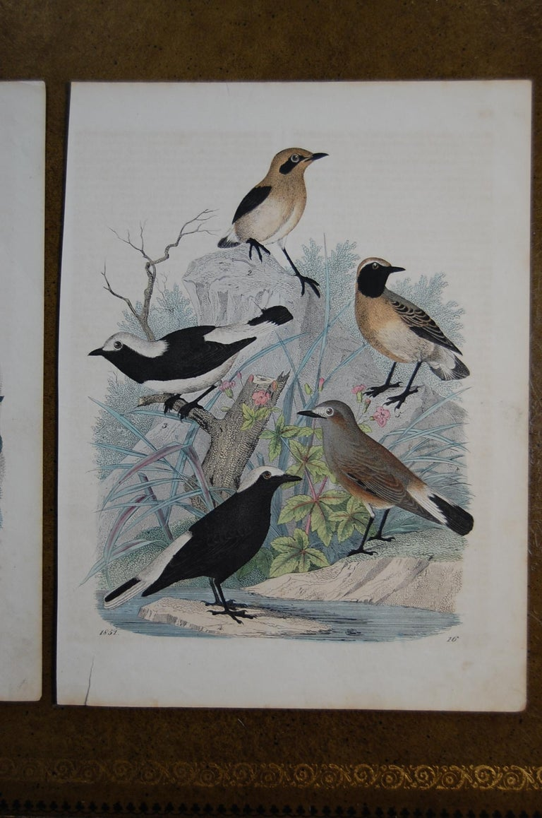 German Two Similar Hand Colored Prints Dated 1851 Depicting Bird Species For Sale