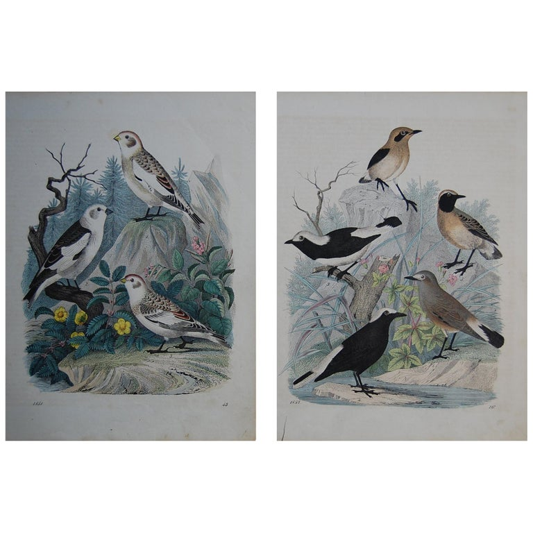 Two Similar Hand Colored Prints Dated 1851 Depicting Bird Species For Sale
