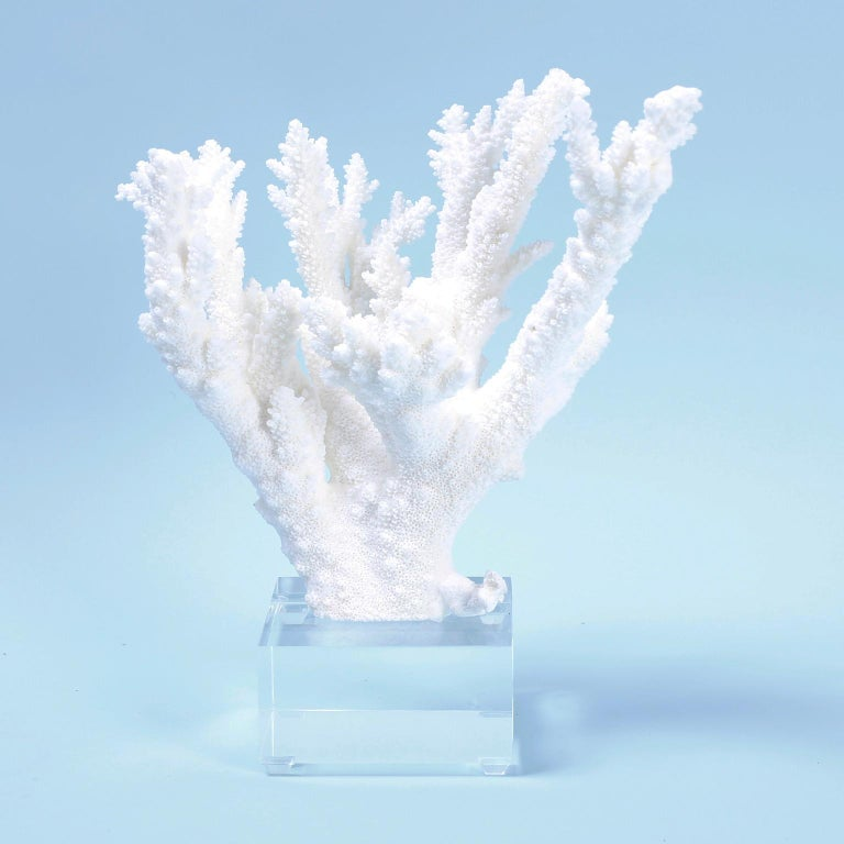 Two White Coral Specimens on Lucite, Priced Individually In Excellent Condition For Sale In Palm Beach, FL