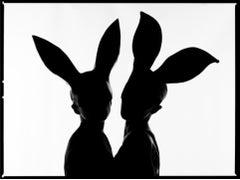 Bunnies Silhouette