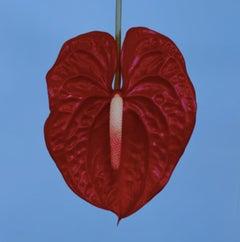 Exotic Emperor Tulip I