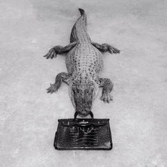 Gator Birkin Monochrome, Photography, Story teller, Bag, Silver gelatine