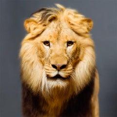 Luke, Photography, Story teller, Lion