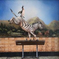 Zebra Striped Pommel Horse