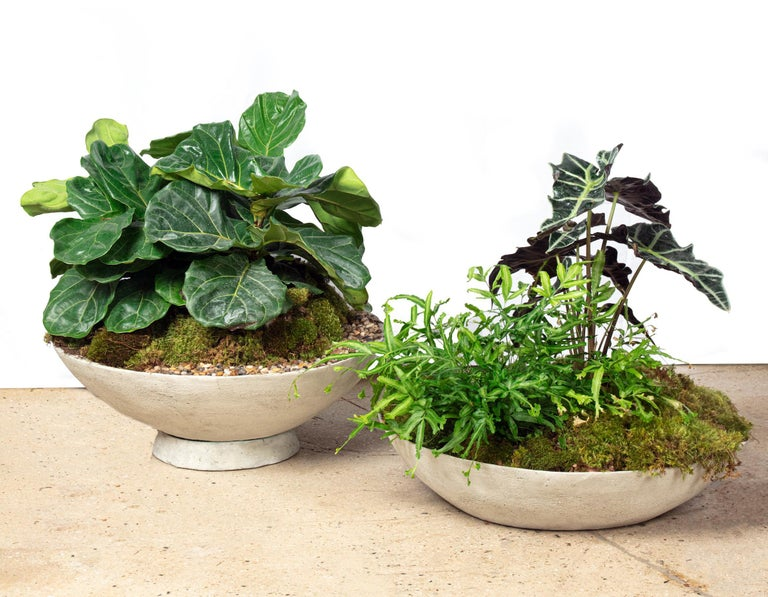 Hand-Crafted Ukiyo Saucer, Concrete Planter by OPIARY (D60
