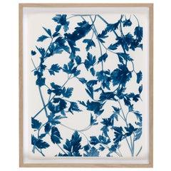 Ulrich Schmitt Fine Art Photography Petroselinum II Blue and White