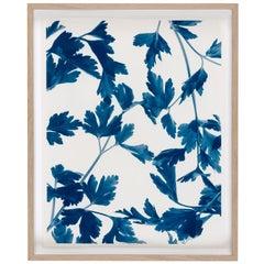 Ulrich Schmitt Fine Art Photography Petroselinum III Blue and White