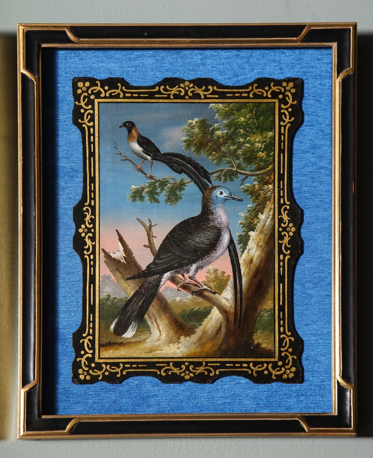 A Rare and Important Set of 28 Paintings Depicting Assorted Bird Species For Sale 12