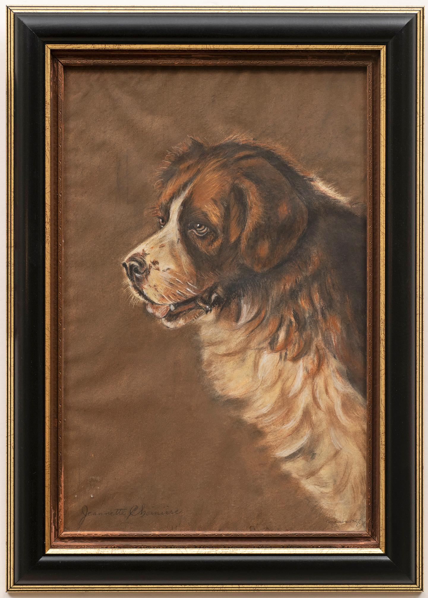 Dog Portrait of a Saint Bernard 1920s