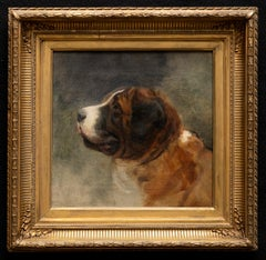 Dog Portrait of a Saint Bernard