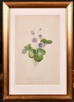 19th Century Still-life Drawings and Watercolours