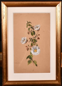 FINE 1860'S BOTANNICAL WATERCOLOUR DRAWING - PAINTED IN 1867 ON THE COTE D'AZUR