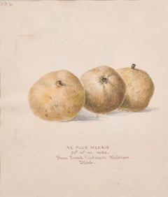 FINE 19thC BOTANNICAL WATERCOLOUR DRAWING - NE PLUS MEURIS - DATED 1863, KENT