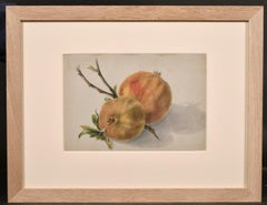 FINE 19thC BOTANNICAL WATERCOLOUR DRAWING - TWO RED & GREEN APPLES & BRANCH