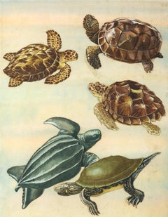 Gopher Tortoise, Hawksbill, Loggerhead, Leatherback and Map Turtles.