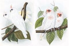 Pair of Male & Female Cockatoo Watercolors