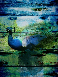 "Peacock Blue Green Painting, Mixed Media Textured on Canvas 60 H X 40"" W"