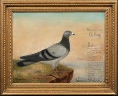 """Portrait Of """"De Hoop"""" A Champion Racing Pigeon, circa 1900"""