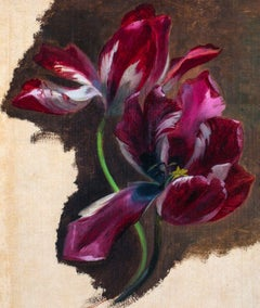 Study Of A Tulip circa 1700