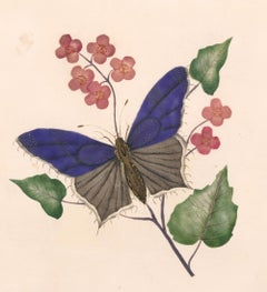 Victorian Butterfly Watercolor