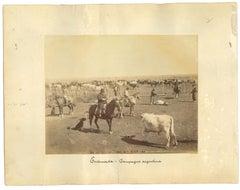 Ancient Landscape in Ensenada - Mexico - Original Vintage Photo - 1880s