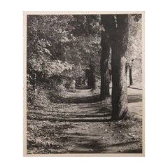 Black and White Perspective Photograph of Sidewalk with Trees