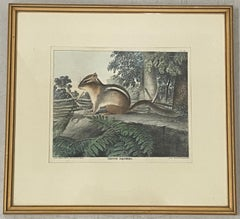"""19th Century """"Ground Squirrel"""" Hand Colored Lithograph by T. Doughty C.1830s"""