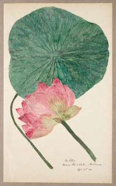 19th Century Hand Colored Nature Print - 6
