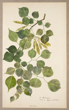 19th Century Hand Colored Nature Print - 7