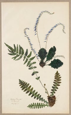 19th Century Hand Colored Nature Print - 9