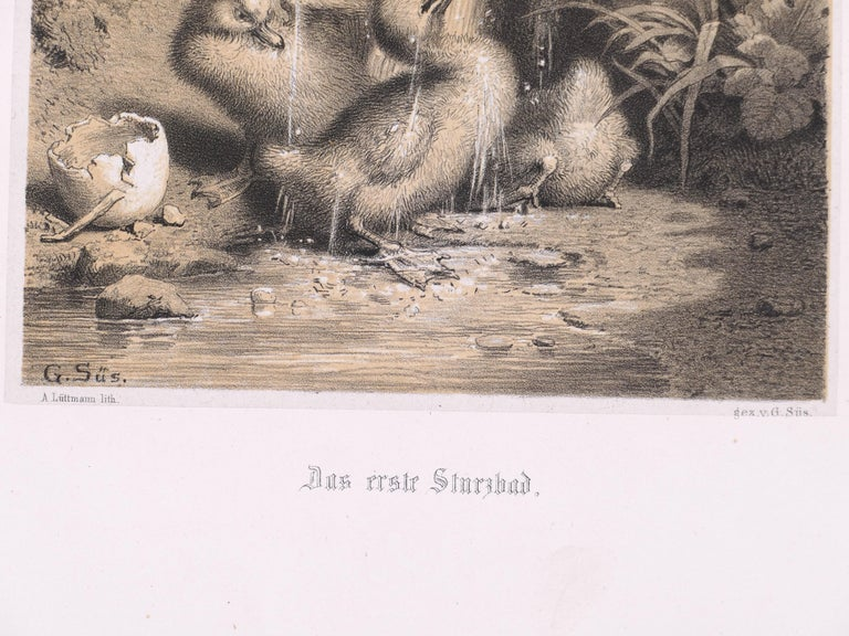A Little Duckling - Original Lithograph - Late 19th Century - Brown Figurative Print by Unknown