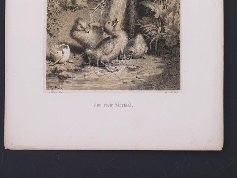 Image dimensions: 20,5 x 15,5 cm  A Little Duckling is an adorable lithograph printed on poussins rigid paper.  Signed on plate: G. Süs. Original Title: Das Erste Sturihad.  Good conditions, except for usual yellowing of the paper.  This beautiful