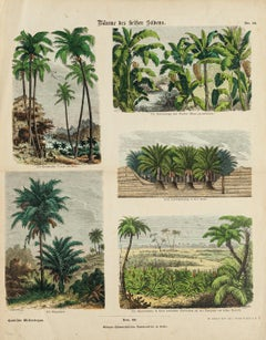 American Trees - Etching - 19th Century