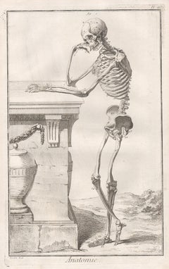 'Anatomie' - 2 Skeleton images, French medical anatomy engravings, c1770