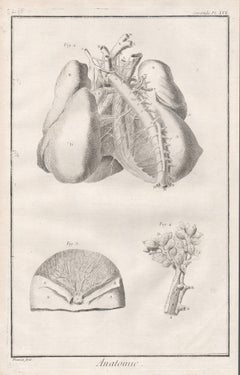 'Anatomie' - Arteries of the chest, French anatomy medical engraving, c1770