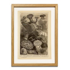 Anemone Print in Wooded Frame, from Antiquarian Encyclopedia, Botanical Prints